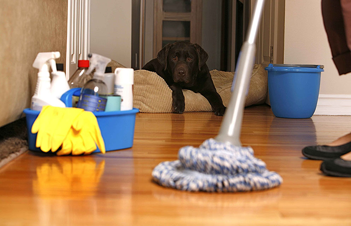 Cleaner-and-Dog